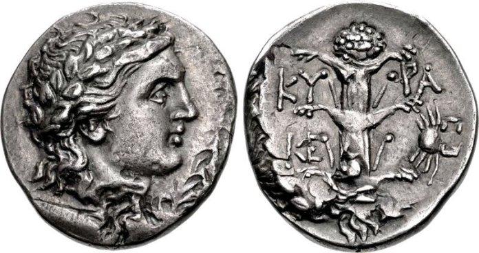 Cyrene silphium.jpg